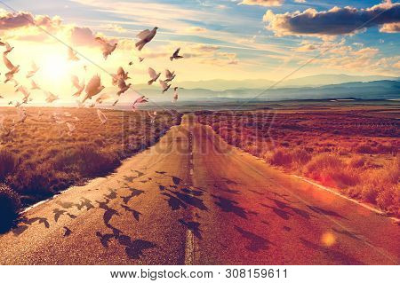 Road Scenic In Sunset Landscape And Doves Flying.