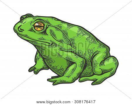 Hallucinogenic Frog Toad Animal Color Sketch Engraving Vector Illustration. Scratch Board Style Imit