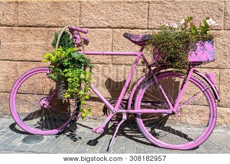 A Horizontal View Of An Old Bicycle Spray Painted Pink And Covered With Potted Plants And Ivy