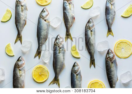 Fresh Bluefish With Lemon On White. Fish Pattern. View From Above.