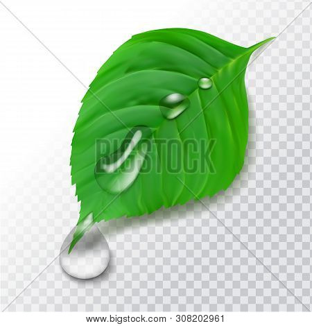 Realistic 3d  Green Leaf With Water Drops After Rain