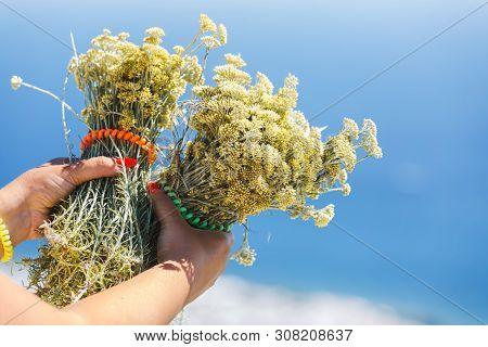 Female Hands Holding Bouquet Of Immortelle Hydrosol Or  Everlasting(  Helichrysum Italicum) Yellow B