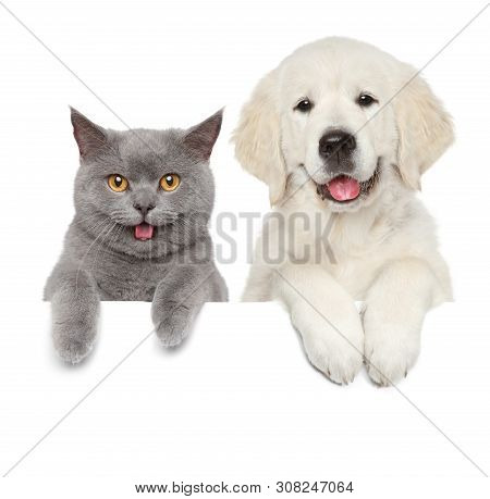 Cat And Dog Over White Banner. Animal Themes