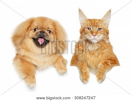 Cat And Dog Together Above Banner, Isolated On White Background. Animal Themes
