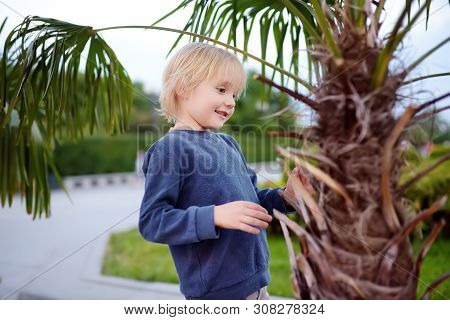 Little boy exploring palm tree. Child first time sees palm tree. Activity for inquisitive child. Travel and tourism. poster
