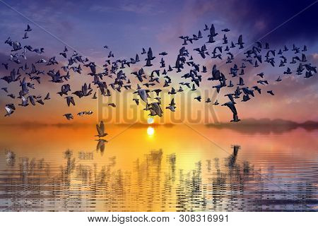 Birds Flying During Sunset Over The Seashore