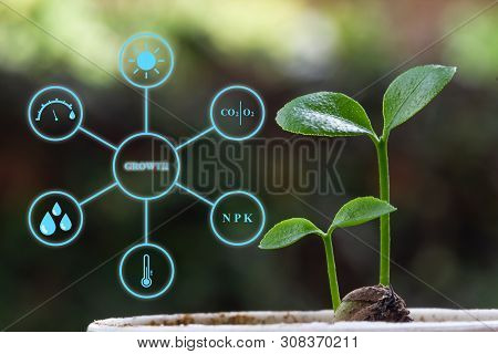 A Modern Agricultural Farm Field With Technology Concept. Orange Seedlings With Digital Display Show