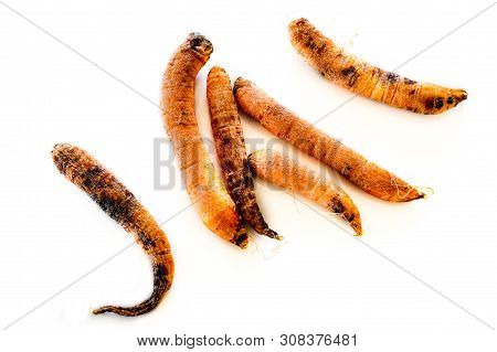 Top View Of Six Rotten, Dry, Dead Carrots Isolated On White Background. Black Mold Fungus On Carrots