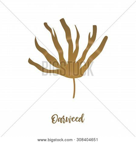 Laminaria Seaweed - brown algae. sea plant. realistic isolated on white. Kelp. vector illustration. poster