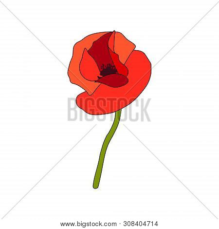 Red Poppy full-blown flower and stem. Side view. Anzac. Flat sketch style. Bud flagging poster