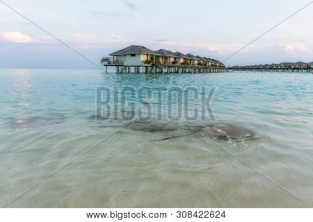 Stingrays Swam To Shore To Enjoy A Delicious Meal