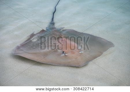 Stingray Swam To Shore To Enjoy A Delicious Meal