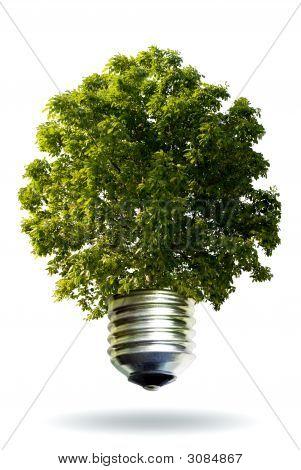 Ecologic Concept