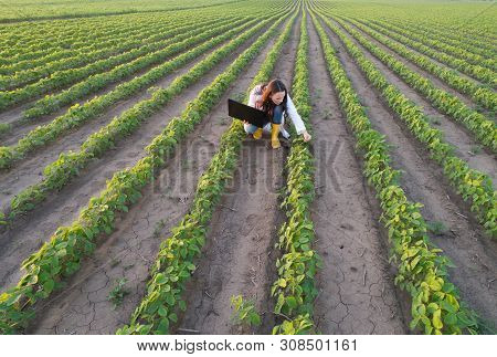 Top View Of Agronomist Checking Plant Growth In Field