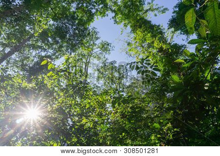 Rainforest Landscape With Lensflare As Sun Breaks Through Between Lush Foliage In Danum Valley, Saba