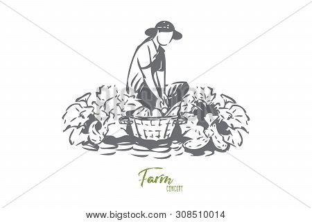 Growing vegetables concept sketch. Farming business, gardener chores, agronomy, female farmer collecting vegetarian food, natural products, rural economy banner. Isolated vector illustration poster