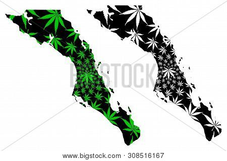 Baja California Sur Map Is Designed Cannabis Leaf Green And Black, Estado Libre Y Soberano De Baja C