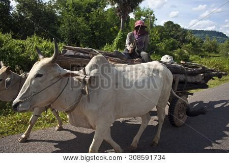 Siem Reap, Cambodia - July 16: Poor Man On His Water Buffalo Cart On July 16, 2012 Near Siem Reap, C