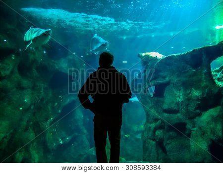 La Rochelle, France - May 14, 2019: A Man Near Sharks Area In Aquarium De La Rochelle, France