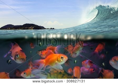 Under Water Split View Of Swimming Fish And Ocean Wave Under Blue Sky