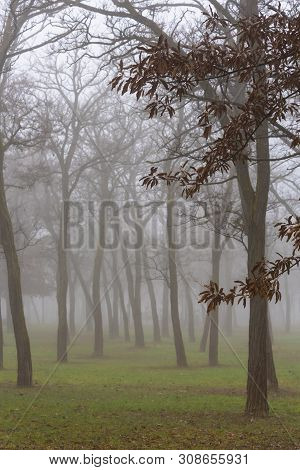 Beautiful Morning In The City Park, With Mist And Locust Trees
