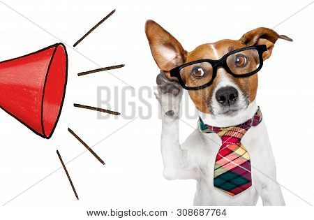 Jack Russell Boss Or Business Dog Listening With One Ear Very Carefully To A Red Big Megaphone