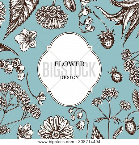 Badge Over Design With Aloe, Calendula, Lily Of The Valley, Nettle, Strawberry, Valerian Stock Illus