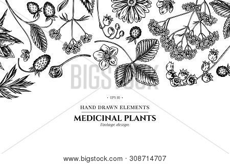 Floral Design With Black And White Aloe, Calendula, Lily Of The Valley, Nettle, Strawberry, Valerian