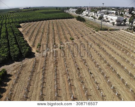 rows of fruit trees citrus plantation regeneration poster