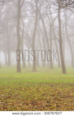 Beautiful Scenery In The Park, With Locust Trees And Fog, In Autumn