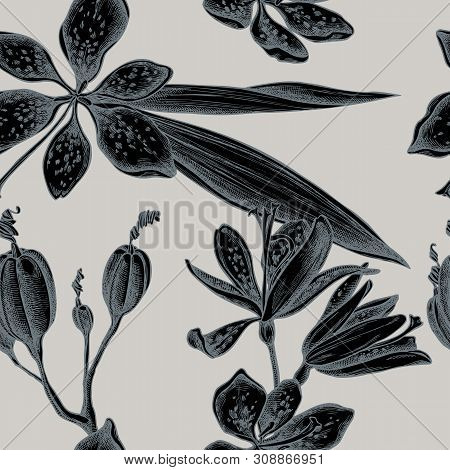 Seamless Pattern With Hand Drawn Stylized Blackberry Lily Stock Illustration
