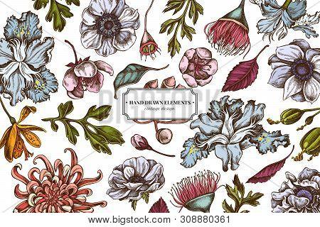 Floral Design With Colored Japanese Chrysanthemum, Blackberry Lily, Eucalyptus Flower, Anemone, Iris