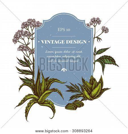 Badge Design With Colored Aloe, Nettle, Valerian Stock Illustration
