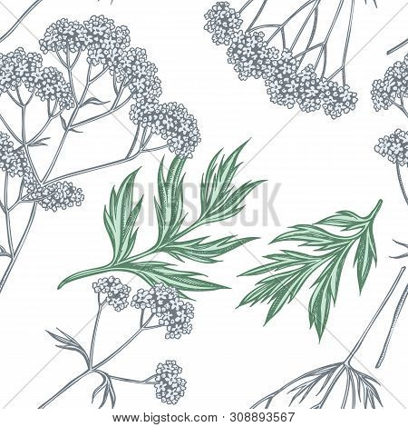 Seamless Pattern With Hand Drawn Pastel Valerian Stock Illustration