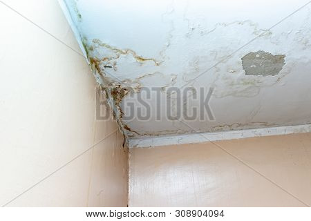 Water Leak On White Ceiling, Insurance Accident Because Of Neglect Disorderly Careless Neighbours