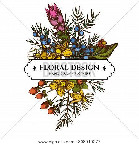 Floral Bouquet Design With Colored Juniper, Hypericum, Turmeric Stock Illustration
