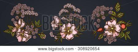 Flower Bouquet Of Dog Rose, Valerian, Angelica Stock Illustration