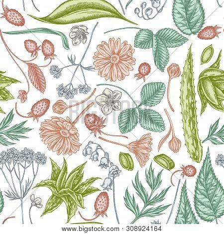 Seamless Pattern With Hand Drawn Pastel Aloe, Calendula, Lily Of The Valley, Nettle, Strawberry, Val