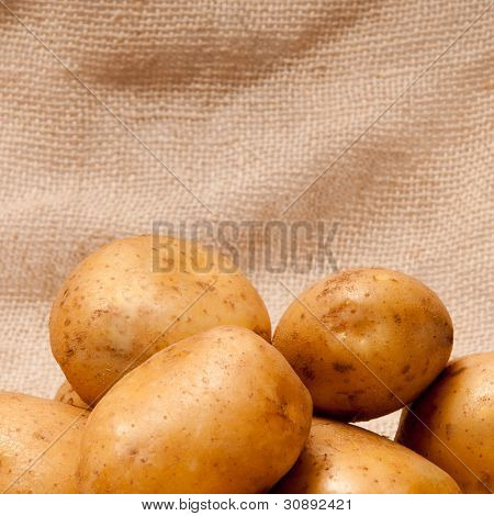 ripe fresh potato tubers in brown sackcloth