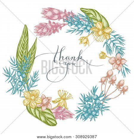 Floral Wreath Of Pastel Juniper, Hypericum, Turmeric Stock Illustration