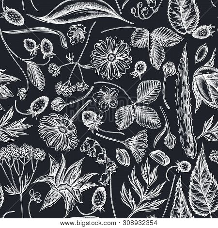 Seamless Pattern With Hand Drawn Chalk Aloe, Calendula, Lily Of The Valley, Nettle, Strawberry, Vale