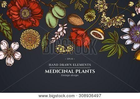 Floral Design On Dark Background With Almond, Dandelion, Ginger, Poppy Flower, Passion Flower, Tilia
