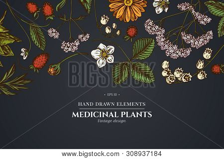 Floral Design On Dark Background With Aloe, Calendula, Lily Of The Valley, Nettle, Strawberry, Valer