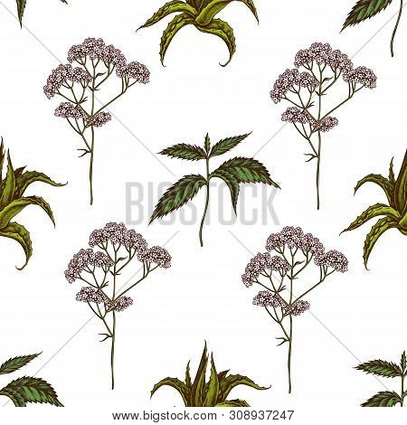 Seamless Pattern With Hand Drawn Colored Aloe, Nettle, Valerian Stock Illustration