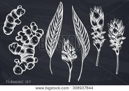 Vector Set Of Hand Drawn Chalk Turmeric Stock Illustration