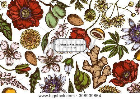 Floral Design With Colored Almond, Dandelion, Ginger, Poppy Flower, Passion Flower, Tilia Cordata St