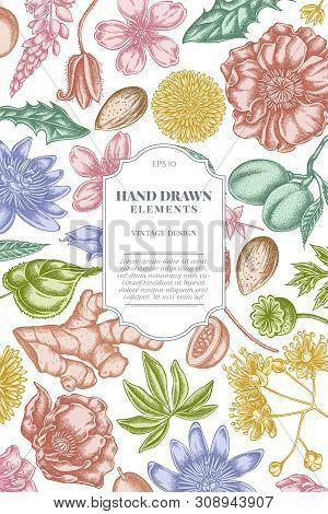 Card Design With Pastel Almond, Dandelion, Ginger, Poppy Flower, Passion Flower, Tilia Cordata Stock