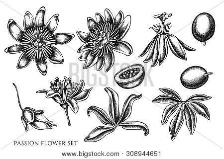 Vector Set Of Hand Drawn Black And White Passion Flower Stock Illustration