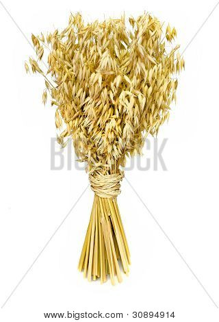 Yellow oats bouquet isolated on white wiht shadow poster