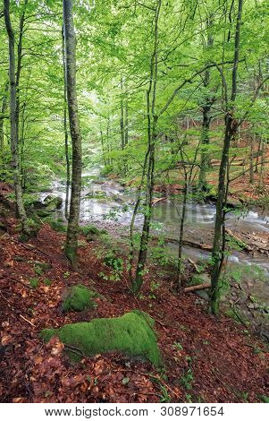 Rapid Mountain River In Beech Forest. Beautiful Nature Scenery In Springtime. Mossy Boulders On The